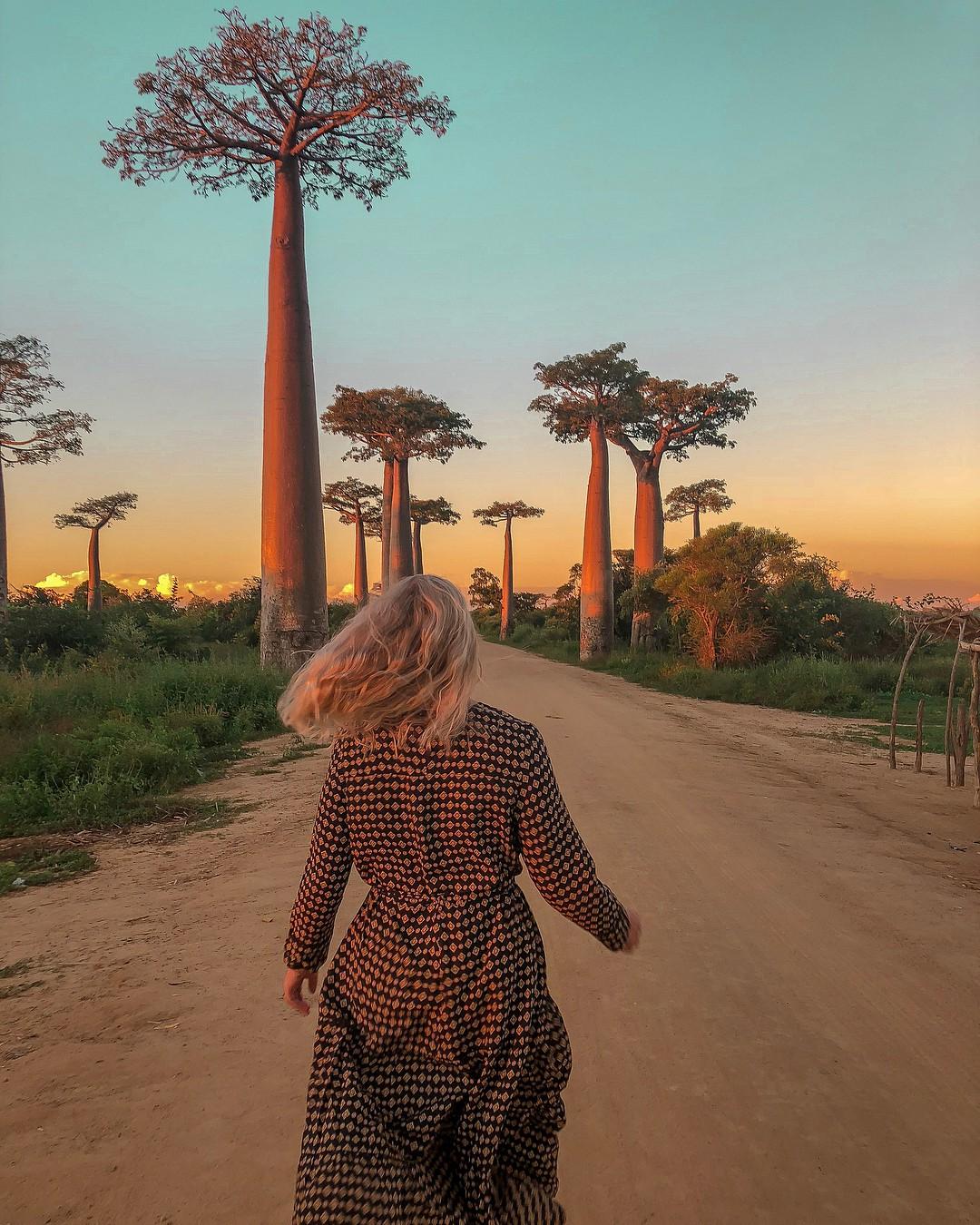 Dính phải lời nguyền phải mọc ngược, rừng cây ở Madagascar nay lại trở thành điểm check-in xịn xò của giới blogger du lịch - Ảnh 3.