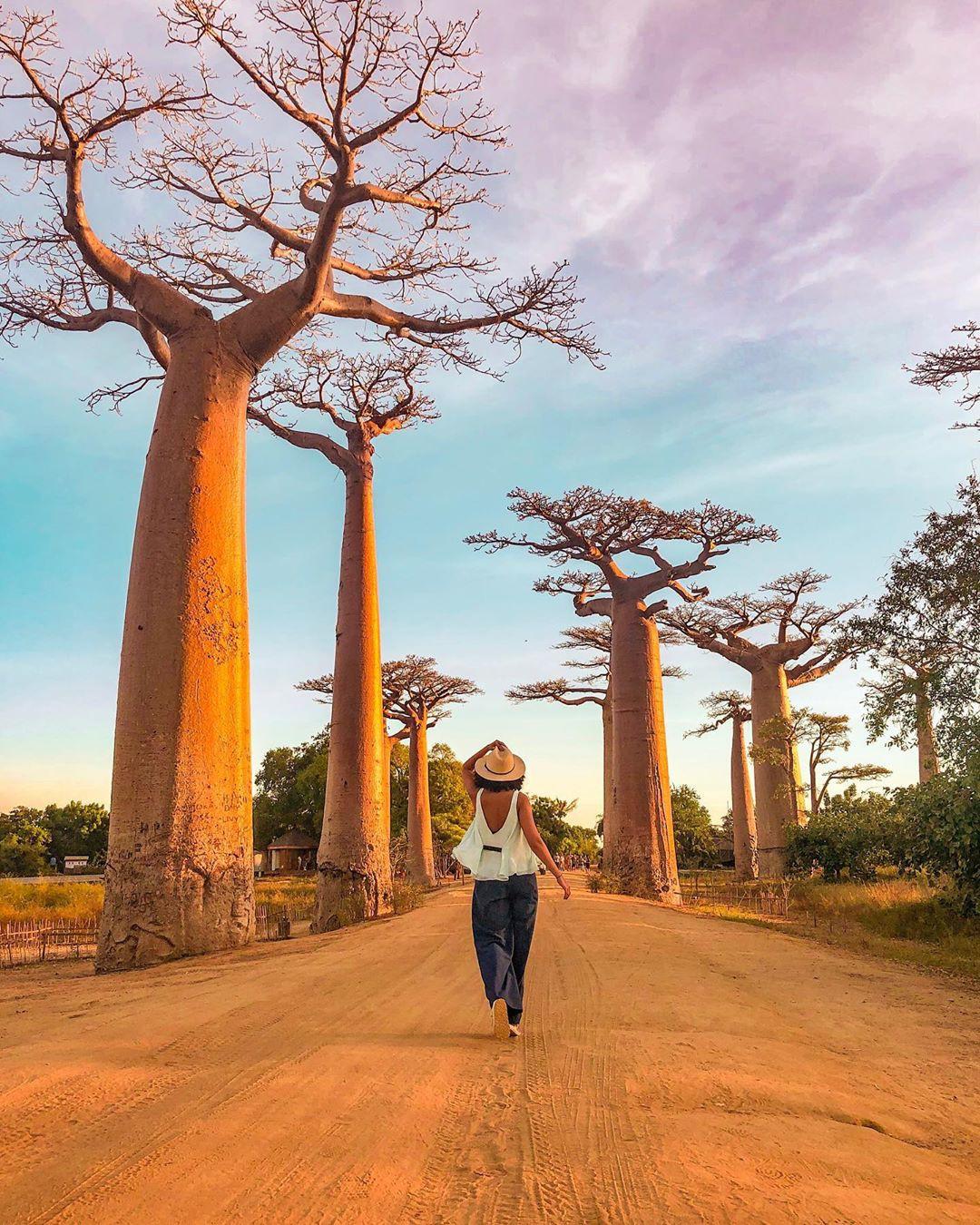 Dính phải lời nguyền phải mọc ngược, rừng cây ở Madagascar nay lại trở thành điểm check-in xịn xò của giới blogger du lịch - Ảnh 9.