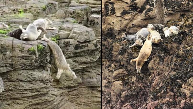 Hình ảnh thay cho vạn lời nói: Hải cẩu đồng loạt ném mình xuống vách đá vì bị du khách dồn ép đến đường cùng - Ảnh 4.