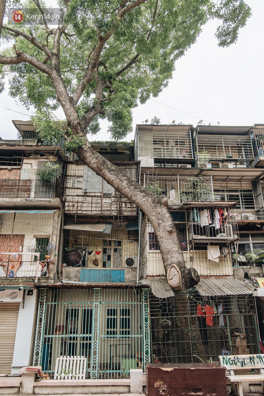 Kỳ lạ cây xanh mọc xuyên những căn nhà trong khu tập thể 60 năm tuổi ở Hà Nội - Ảnh 10.
