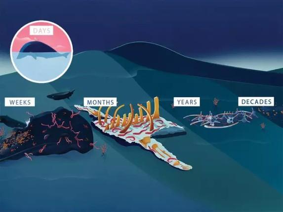 Chuyện ngày cuối đời của một con cá voi: Cái chết đau đớn tột cùng không thể tránh khỏi, nhưng lại là khởi đầu cho tương lai tốt đẹp hơn - Ảnh 8.