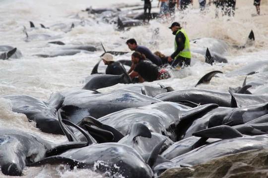 Chuyện ngày cuối đời của một con cá voi: Cái chết đau đớn tột cùng không thể tránh khỏi, nhưng lại là khởi đầu cho tương lai tốt đẹp hơn - Ảnh 2.