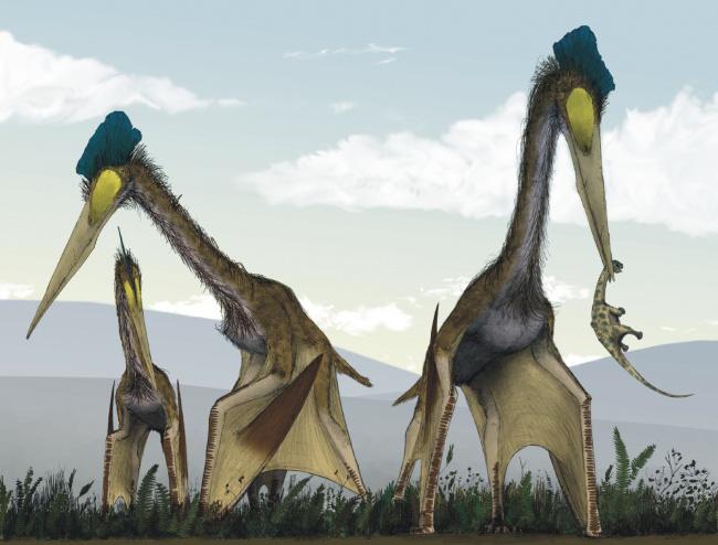 Choáng ngợp trước loạt ảnh những sinh vật khổng lồ nhất từng xuất hiện trên Trái đất khiến con người tự thấy mình chỉ là giống loài tí hon - ảnh 13