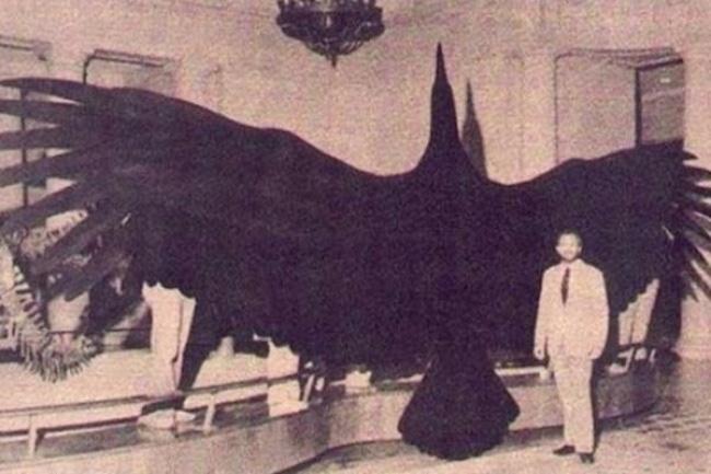 Choáng ngợp trước loạt ảnh những sinh vật khổng lồ nhất từng xuất hiện trên Trái đất khiến con người tự thấy mình chỉ là giống loài tí hon - ảnh 5