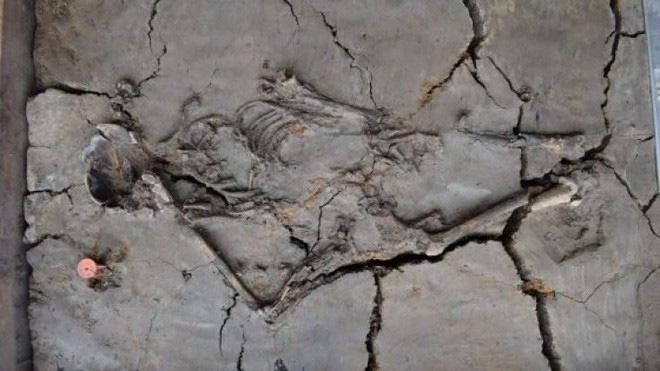 Phát hiện ngôi mộ 6.000 tuổi, các nhà khoa học kinh ngạc khi thấy cảnh tượng chưa từng thấy, hé lộ điều thú vị về trẻ sơ sinh ngàn đời trước - ảnh 1