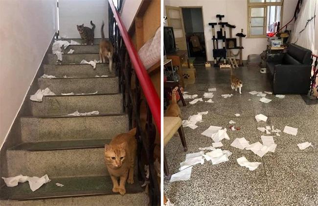Thương lũ mèo không ai trông, chủ gắn kính lên gác xép dõi theo các con vật nhưng nhận lại kết quả khiến nhiều người sởn tóc gáy - ảnh 4