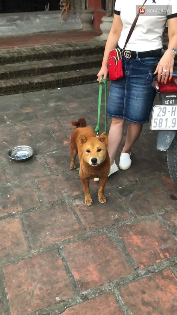 Cậu Vàng tung first look giới thiệu sinh vật lạ: Vẫn là chó Nhật nhưng lông đỏ, hàng siêu hiếm? - ảnh 6