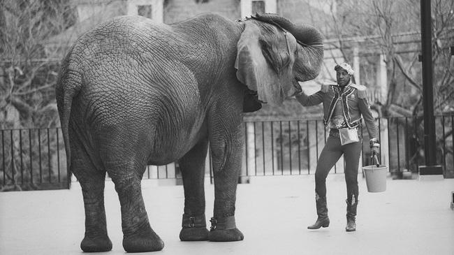 Đôi mắt đỏ rực, tứa máu của một con voi thức tỉnh cả nhân loại: 20 năm chịu cảnh tù đày thống khổ và 87 phát đạn rung chuyển cả thế giới - ảnh 1