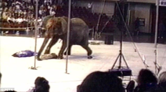 Đôi mắt đỏ rực, tứa máu của một con voi thức tỉnh cả nhân loại: 20 năm chịu cảnh tù đày thống khổ và 87 phát đạn rung chuyển cả thế giới - ảnh 6