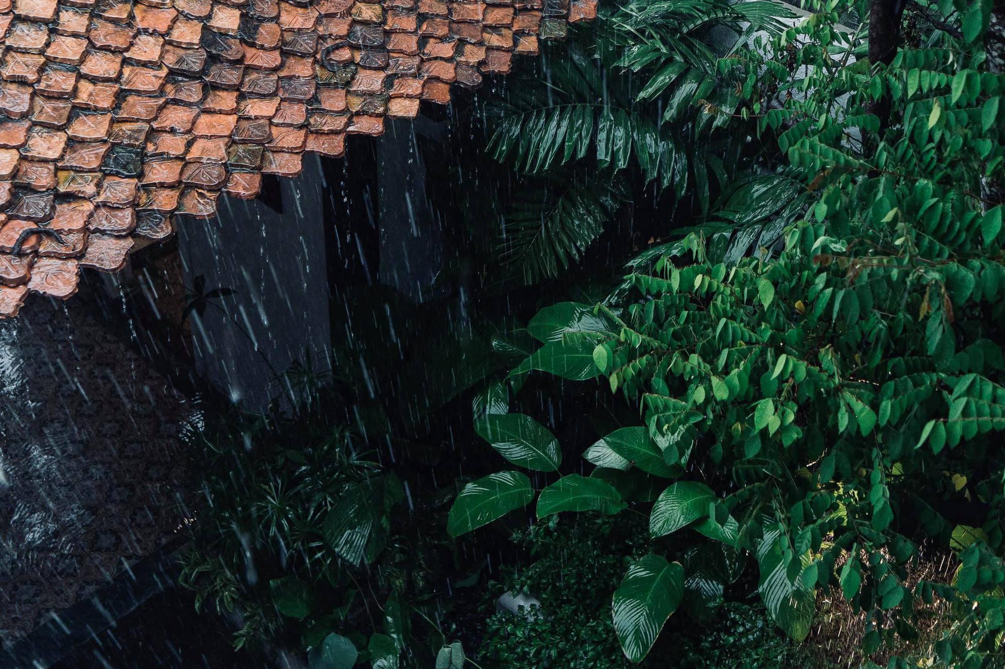 Ngôi nhà 400m2 tại Thảo Điền - Quận 2 được thiết kế từ ngôi biệt thự cổ, không gian thiên nhiên mê đắm lòng người - Ảnh 3.