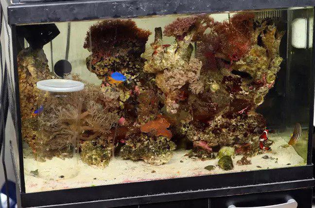 Phát hiện loài ốc có nọc độc giết người đang... bơi ngoe nguẩy trong bể cá nhà mình - Ảnh 2.