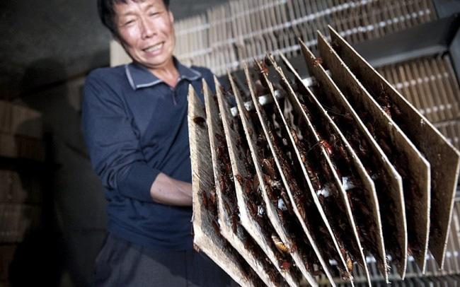 """Những điều """"gây lú"""" cả thế giới ở Trung Quốc, khách du lịch đôi khi thấy sợ hãi hơn là bất ngờ (Phần 4) - Ảnh 5."""