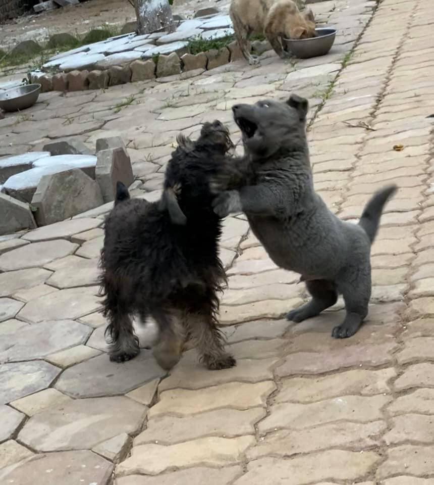 Dúi - chú cún Việt Nam đang gây bão mạng toàn thế giới vì độ phởn và vẻ ngoài ngộ nghĩnh không biết là chó hay mèo? - Ảnh 9.