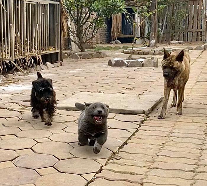 Dúi - chú cún Việt Nam đang gây bão mạng toàn thế giới vì độ phởn và vẻ ngoài ngộ nghĩnh không biết là chó hay mèo? - Ảnh 11.