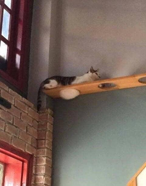 Những bức ảnh chứng minh mèo ở dạng thể lỏng, có thể chảy gọn vào bất kỳ nơi đâu - Ảnh 1.