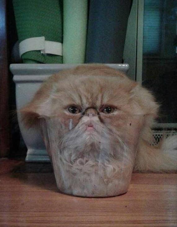 Những bức ảnh chứng minh mèo ở dạng thể lỏng, có thể chảy gọn vào bất kỳ nơi đâu - Ảnh 8.