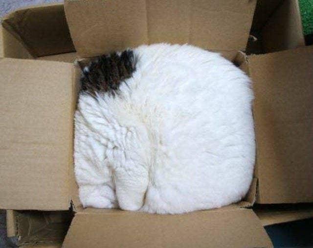 Những bức ảnh chứng minh mèo ở dạng thể lỏng, có thể chảy gọn vào bất kỳ nơi đâu - Ảnh 9.