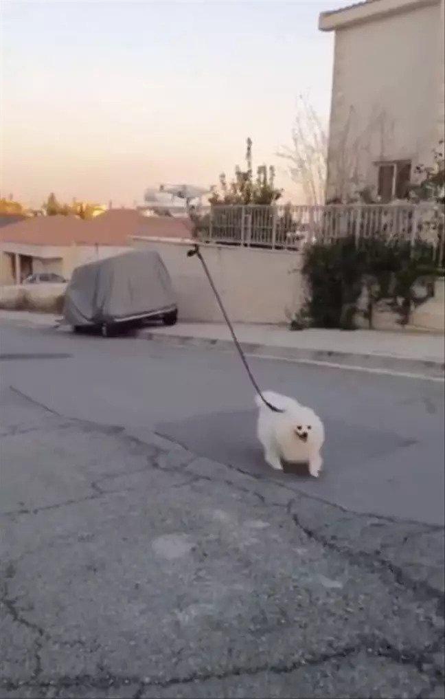 Thanh niên dùng flycam để... dắt chó đi dạo khi đang tự cách ly tại nhà - Ảnh 1.