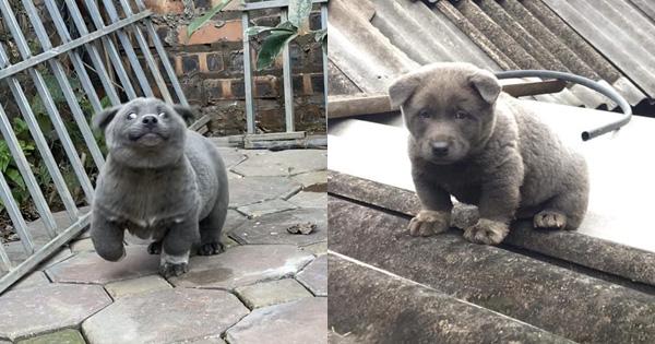 Sự thật về hình ảnh mẹ chú chó idol Nguyễn Văn Dúi, dân tình còn ngỡ ngàng vì giống nhau từ lông đến biểu cảm - ảnh 1