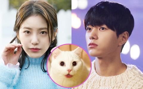 """Meow, the Secret Boy """"ăn điểm"""" fan Kpop vì đem fanfic """"mèo hóa người"""" ra đời thực, thêm cả combo mỹ nam cực phẩm đóng chính?"""
