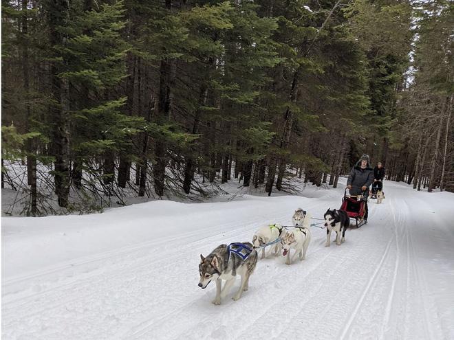 Cô gái sử dụng đàn chó kéo xe trượt tuyết để giao hàng cho người cao tuổi, giúp họ khỏi phải ra ngoài mua sắm - ảnh 1