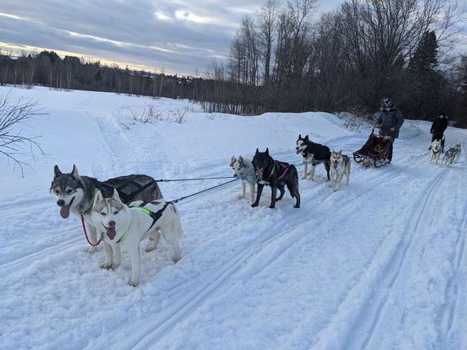 Cô gái sử dụng đàn chó kéo xe trượt tuyết để giao hàng cho người cao tuổi, giúp họ khỏi phải ra ngoài mua sắm - ảnh 2
