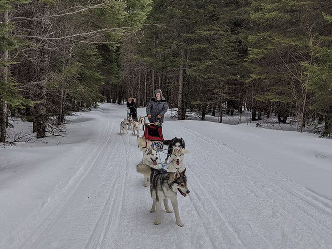 Cô gái sử dụng đàn chó kéo xe trượt tuyết để giao hàng cho người cao tuổi, giúp họ khỏi phải ra ngoài mua sắm - ảnh 3