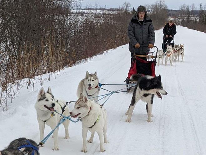 Cô gái sử dụng đàn chó kéo xe trượt tuyết để giao hàng cho người cao tuổi, giúp họ khỏi phải ra ngoài mua sắm - ảnh 4