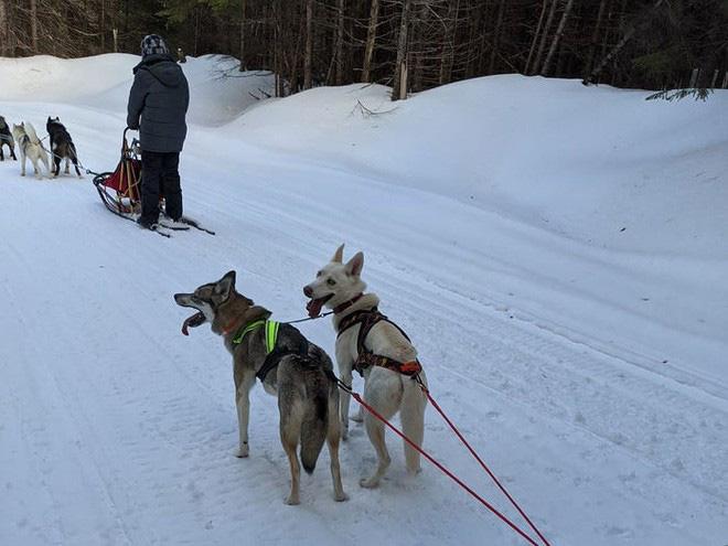 Cô gái sử dụng đàn chó kéo xe trượt tuyết để giao hàng cho người cao tuổi, giúp họ khỏi phải ra ngoài mua sắm - ảnh 5