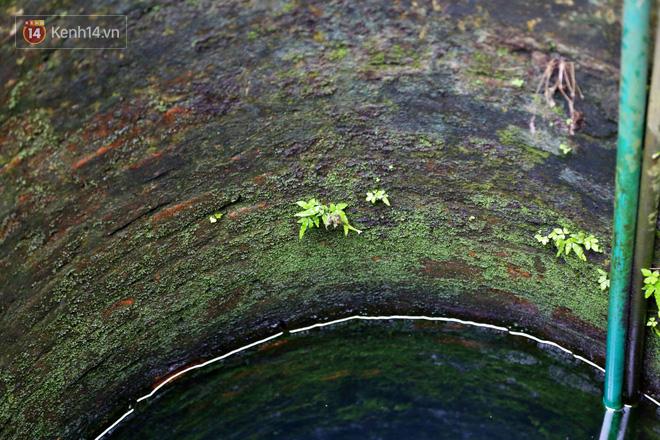 """Lạ kỳ giếng cổ quanh năm nước trong xanh, mát lạnh giữa lòng Hà Nội: """"Những cụ cao tuổi nhất cũng không biết giếng có từ bao giờ"""" - ảnh 4"""