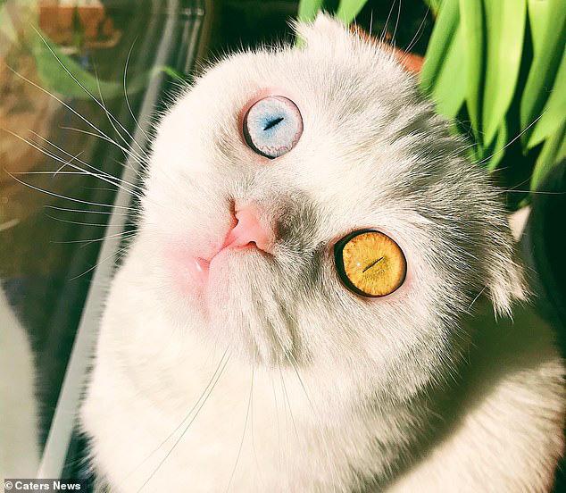 Sở hữu cặp mắt 2 màu đẹp khó tả, chú mèo vẫn bị hắt hủi vì vẻ ngoài khác lạ, phải tìm người cưu mang - ảnh 1