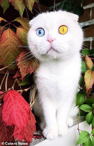 Sở hữu cặp mắt 2 màu đẹp khó tả, chú mèo vẫn bị hắt hủi vì vẻ ngoài khác lạ, phải tìm người cưu mang - ảnh 4