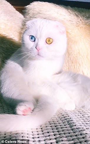 Sở hữu cặp mắt 2 màu đẹp khó tả, chú mèo vẫn bị hắt hủi vì vẻ ngoài khác lạ, phải tìm người cưu mang - ảnh 5
