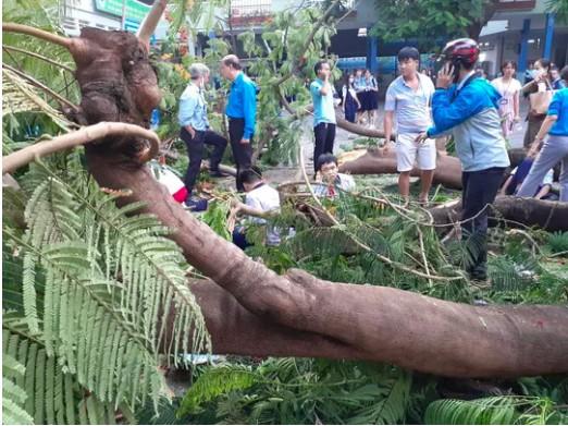 Bộ GD&ĐT yêu cầu các nhà trường khẩn trương kiểm tra, cắt tỉa cây xanh trong trường học - ảnh 1