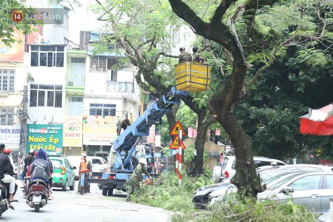 Ảnh: Cận cảnh hàng loạt cây xanh mục gốc, ngả hướng ra giữa đường ở Hà Nội - ảnh 19