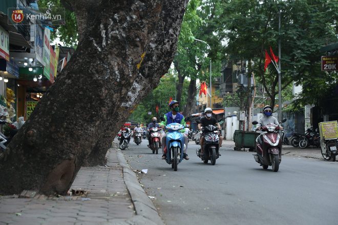 Ảnh: Cận cảnh hàng loạt cây xanh mục gốc, ngả hướng ra giữa đường ở Hà Nội - ảnh 3