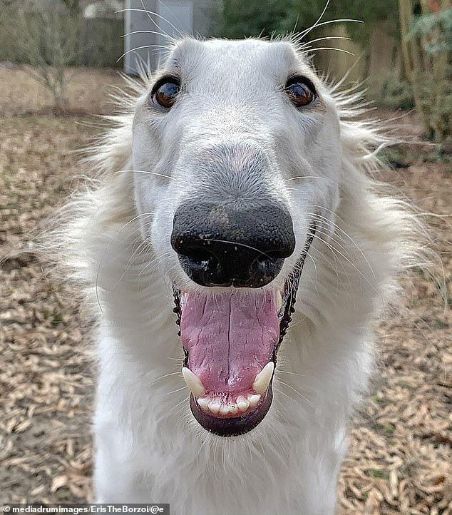 Sở hữu cái mõm dài như mỏ vịt, chú chó bỗng nổi rần rần thành hiện tượng rồi hốt về hơn 200 nghìn fan trên MXH - ảnh 7