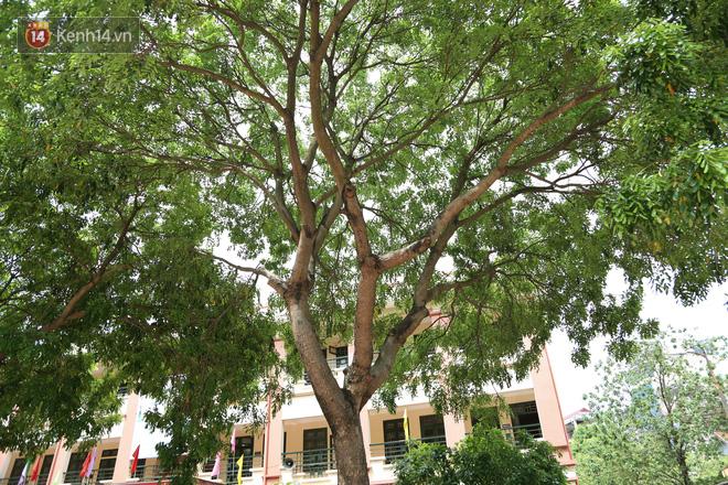 """Sau nỗi kinh hoàng """"cây đổ trong trường học"""": Các trường quản lý cây xanh ra sao? - ảnh 7"""