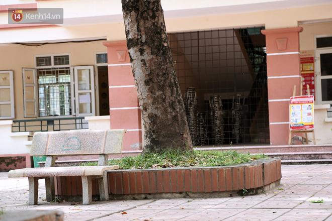 """Sau nỗi kinh hoàng """"cây đổ trong trường học"""": Các trường quản lý cây xanh ra sao? - ảnh 6"""