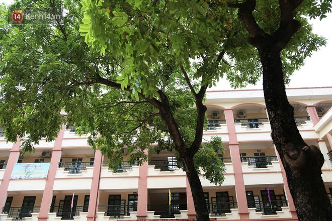 """Sau nỗi kinh hoàng """"cây đổ trong trường học"""": Các trường quản lý cây xanh ra sao? - ảnh 5"""