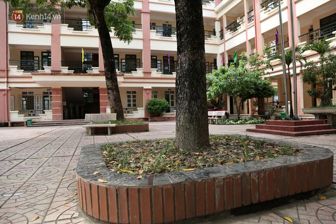 """Sau nỗi kinh hoàng """"cây đổ trong trường học"""": Các trường quản lý cây xanh ra sao? - ảnh 4"""