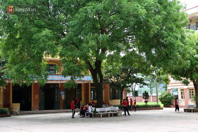 """Sau nỗi kinh hoàng """"cây đổ trong trường học"""": Các trường quản lý cây xanh ra sao? - ảnh 3"""
