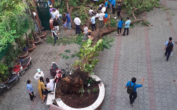 Hà Nội yêu cầu rà soát, cắt tỉa lại tất cả cây xanh ở các trường học trên địa bàn, không để gây nguy hiểm cho học sinh