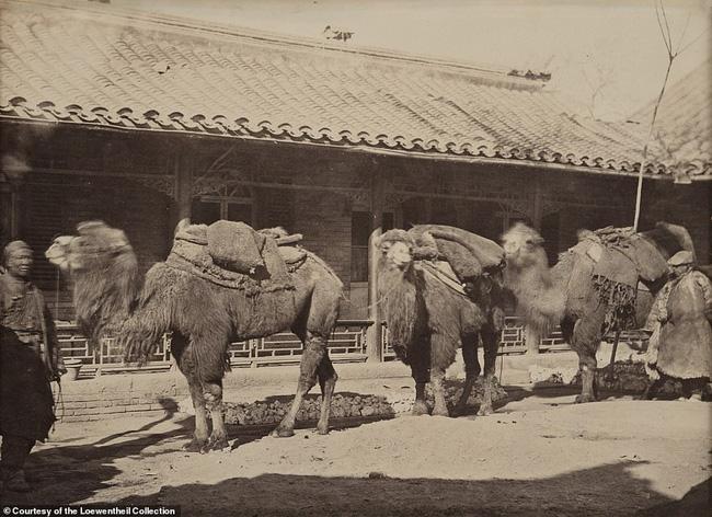 Loạt ảnh triều nhà Thanh nửa cuối thế kỷ 19: Khoảng cách giữa giới thượng lưu, trung lưu và bình dân khiến người xem phải ngỡ ngàng - ảnh 16
