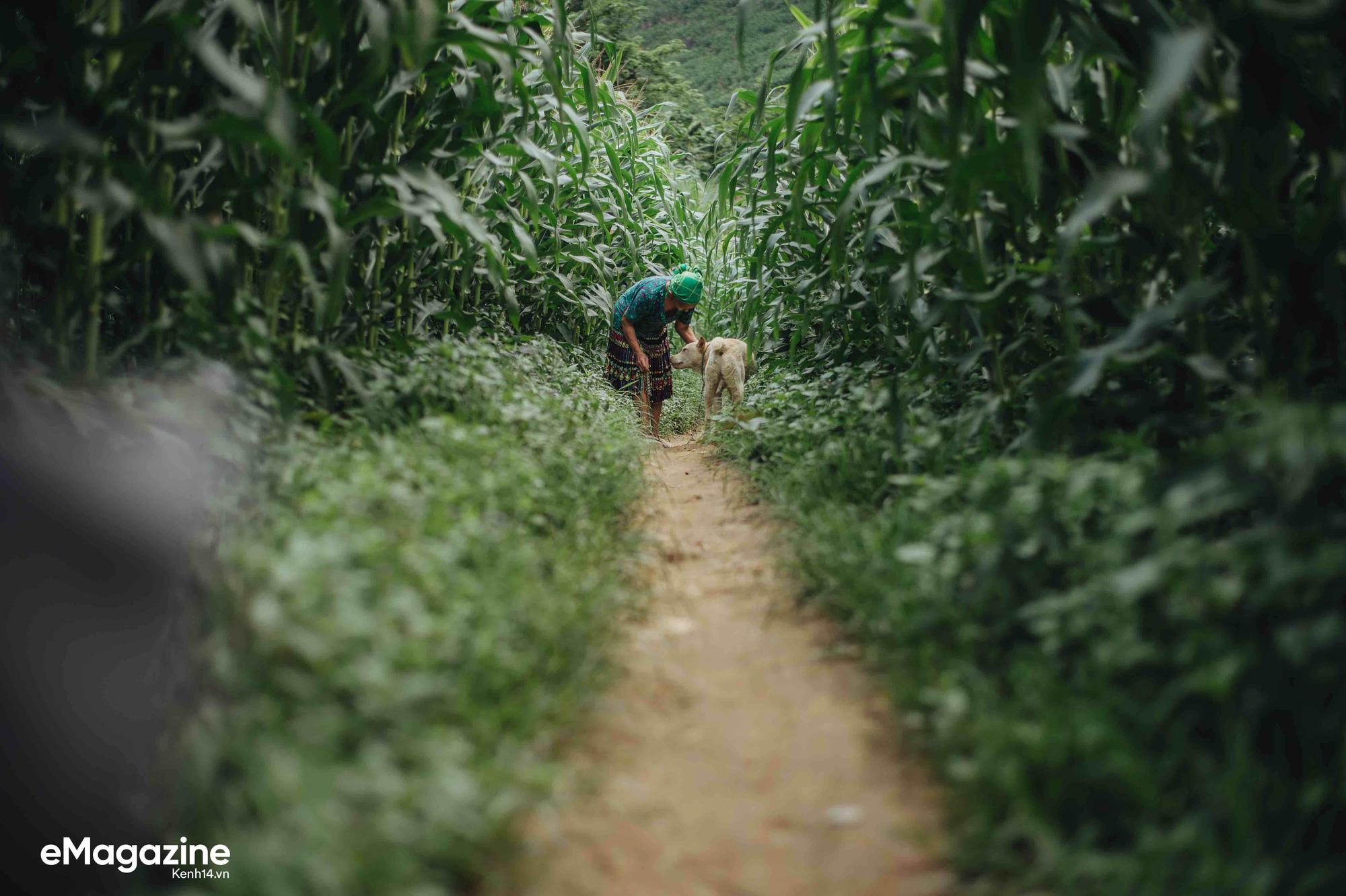 Cuộc đoàn tụ của cụ bà và con chó Cưng ở Hà Giang: Chó về rồi, bà không khóc nữa - Ảnh 8.