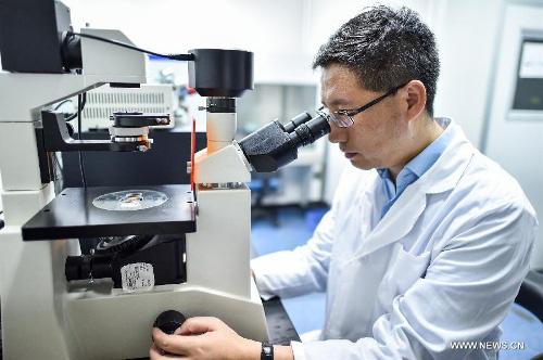 OncoMouse - Con chuột bị cấy gen ung thư một thời làm xáo trộn cả giới nghiên cứu khoa học, khiến ĐH Harvard phải mang tiếng xấu đến tận hôm nay - ảnh 4