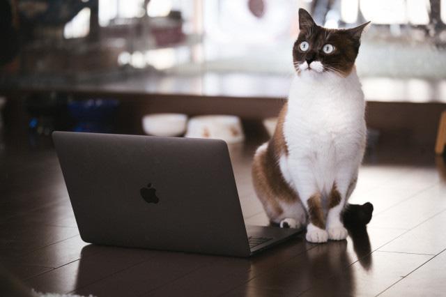 Nhật Bản: Họp từ xa xong sếp vẫn bắt online chỉ để ngắm mèo nhà nhân viên - ảnh 1