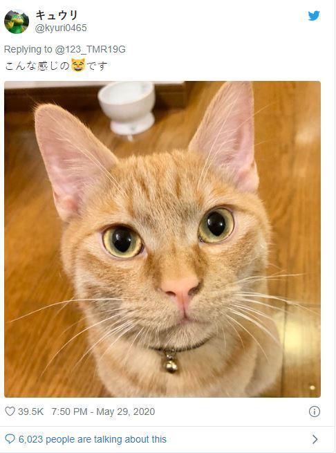 Nhật Bản: Họp từ xa xong sếp vẫn bắt online chỉ để ngắm mèo nhà nhân viên - ảnh 2