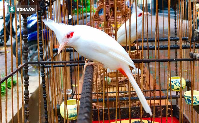 Độc nhất tại Việt Nam: 72 con chim quý tộc trị giá 10 tỷ đồng, có 2 bảo mẫu riêng chăm sóc - ảnh 1