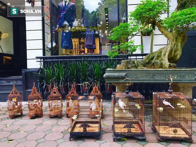 Độc nhất tại Việt Nam: 72 con chim quý tộc trị giá 10 tỷ đồng, có 2 bảo mẫu riêng chăm sóc - ảnh 4